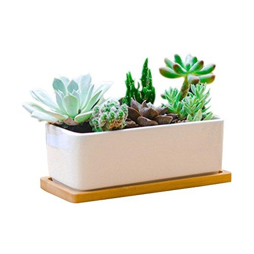 Succulents Choice 10 Inch Rectangular White Ceramic